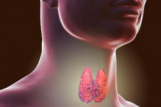 Veja mais sobre as disfunções causadas pela tireoide